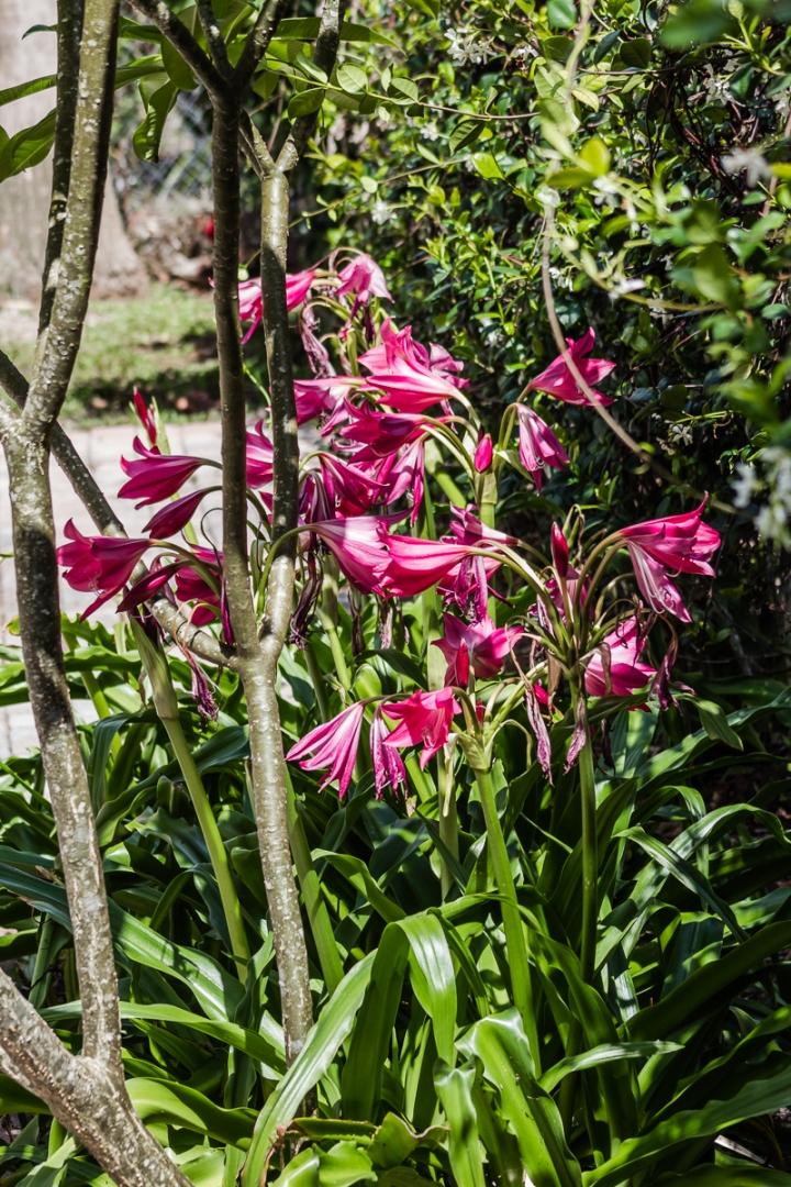 liliesside5615-2