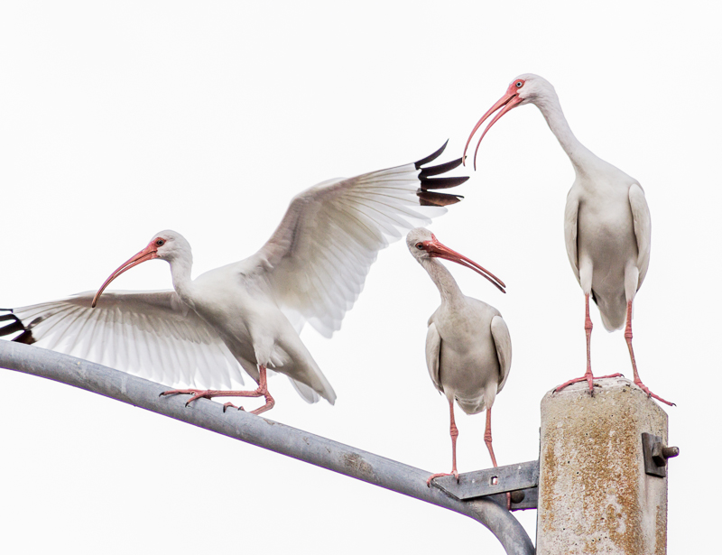 threebirds