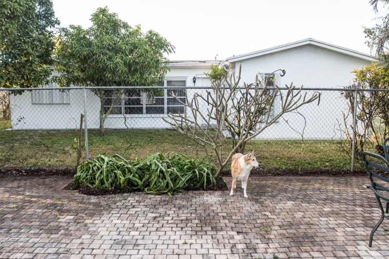 hedge222161