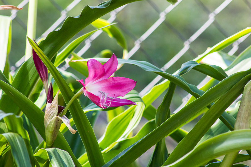 lily4916_1