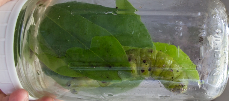 catpill