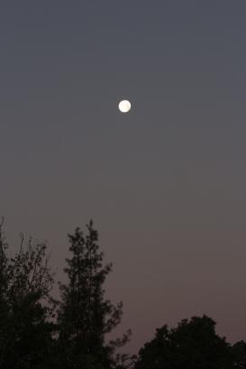 moon318